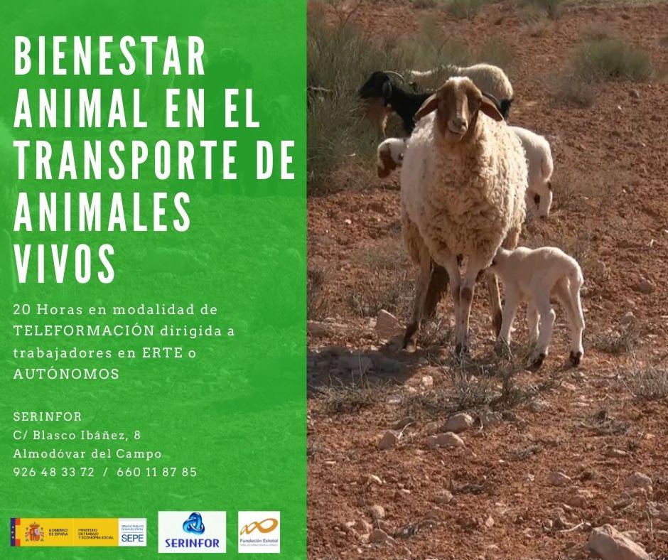 AGAN001PO - BIENESTAR ANIMAL EN EL TRANSPORTE DE ANIMALES VIVOS